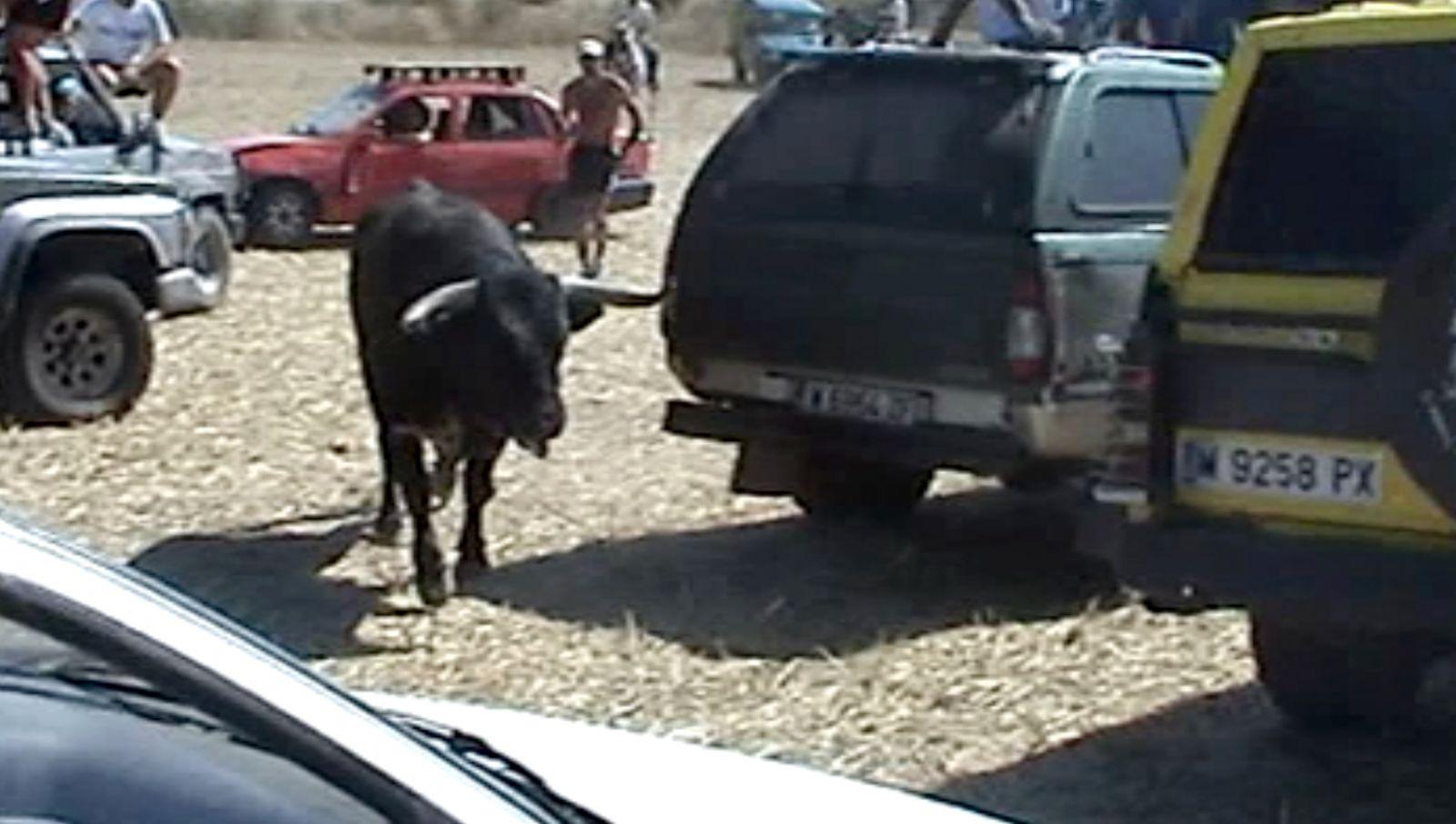 Documentan el acoso, atropello y muerte de un toro en Galáp 01_galapagos_21082010