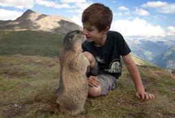 Cuatro años de amistad entre un niño y una colonia de marmotas (fotos increíbles) Matteo_alpes