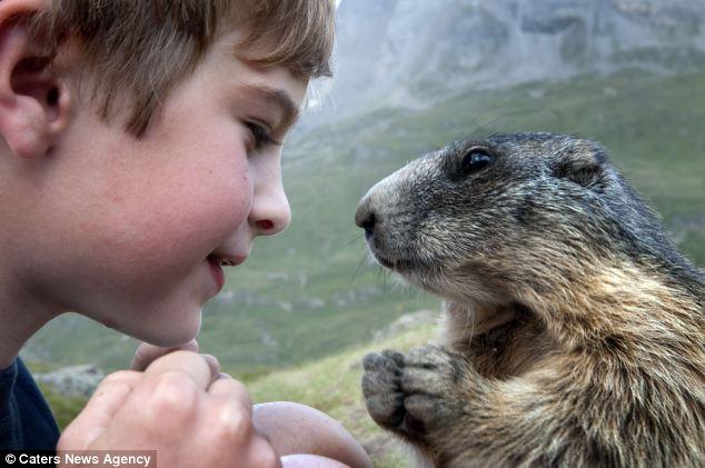 Cuatro años de amistad entre un niño y una colonia de marmotas (fotos increíbles) Matteo_marmota_rostro