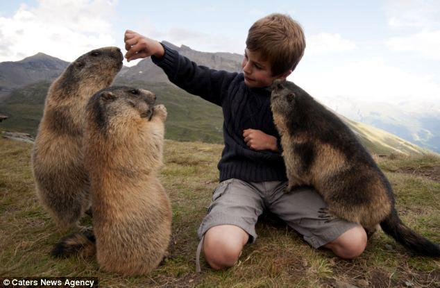 Cuatro años de amistad entre un niño y una colonia de marmotas (fotos increíbles) Matteo_marmotas