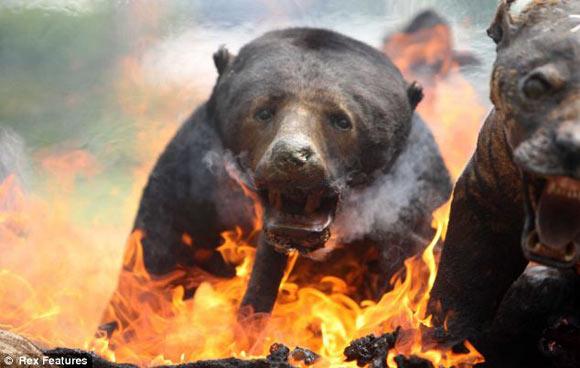 258 Animales Disecados Incautados Por Las Autoridades