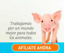Trabajamos por un mundo mejor para todos los animales. Afíliate ahora.