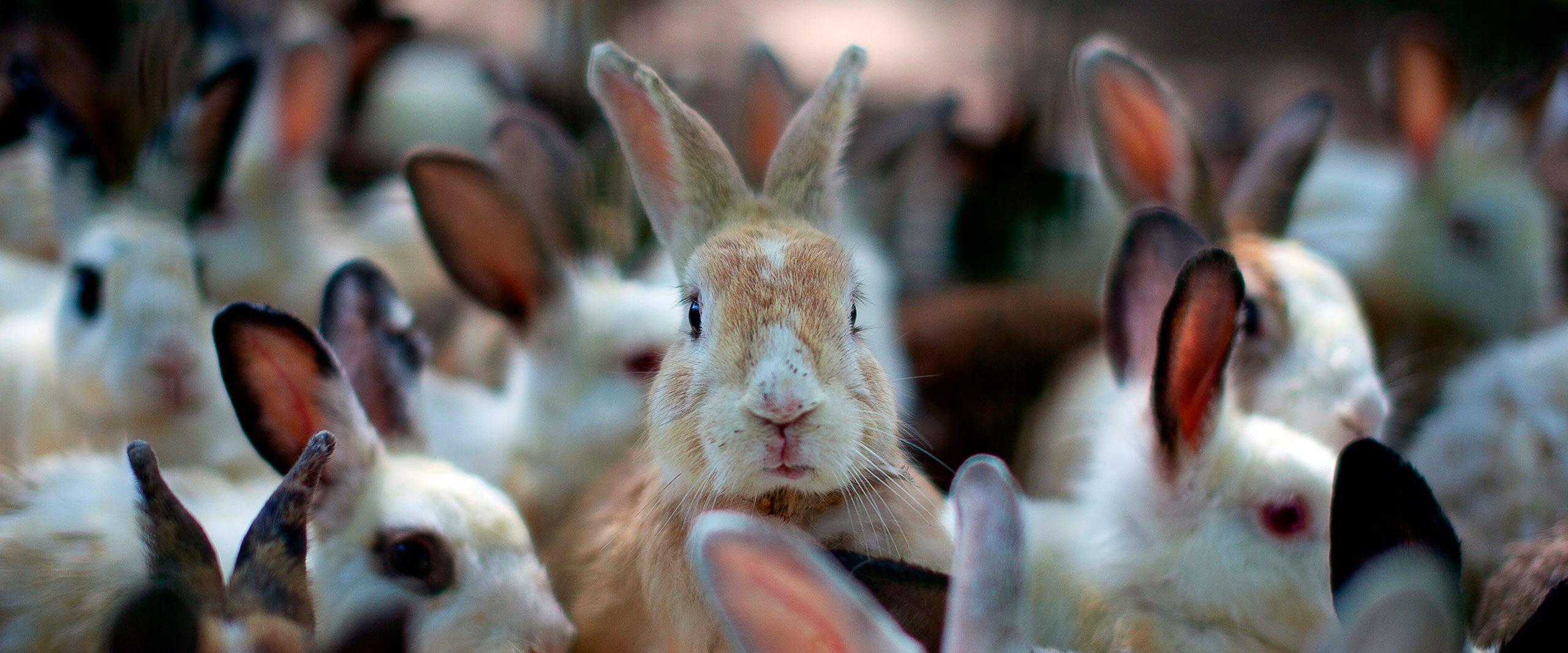 Europa Más Cerca De Prohibir Las Jaulas En La Cría De Conejos Igualdad Animal