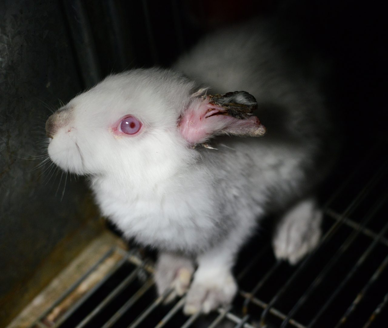 Videos De Granjas De Conejos En España