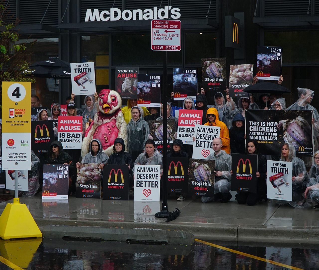 McDonalds, pollos, estados unidos, igualdad, animal